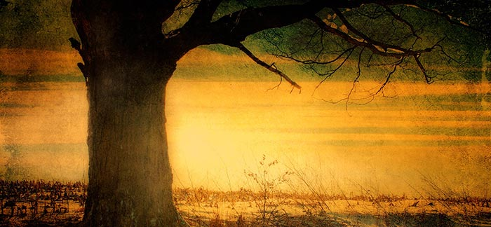Image of a painting of a field with tree at sunset for Quotacy blog How Does Depression Affect Life Insurance Rates?
