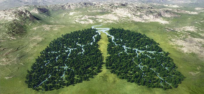 Image of river running through two sections of trees shaped like lungs for Quotacy blog Life Insurance & COPD: Buyer's Guide.