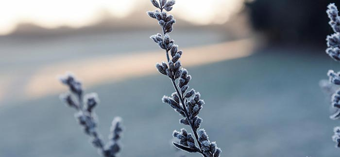 Image of tips of tree branches covered in winter frost for Quotacy blog Plan for the What Ifs of Tomorrow.
