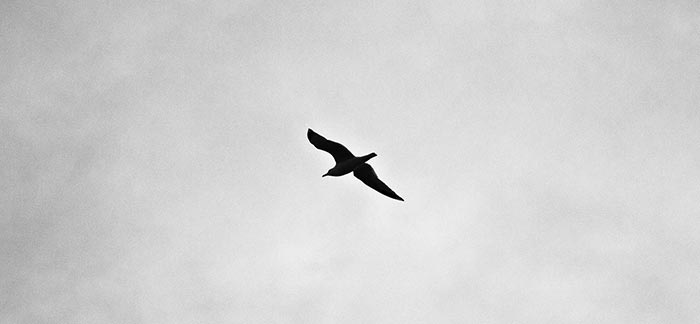 Image of seagull flying in sky for Quotacy blog Financial Steps to Take When Your Spouse Dies.