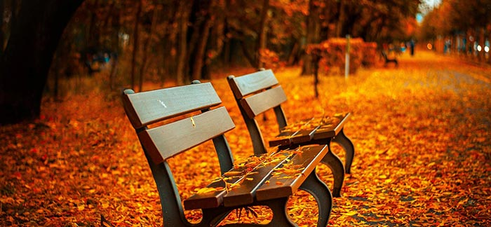 Image of two empty benches with autumn leaves on the ground for Quotacy blog Steps to Take After the Death of a Loved One.