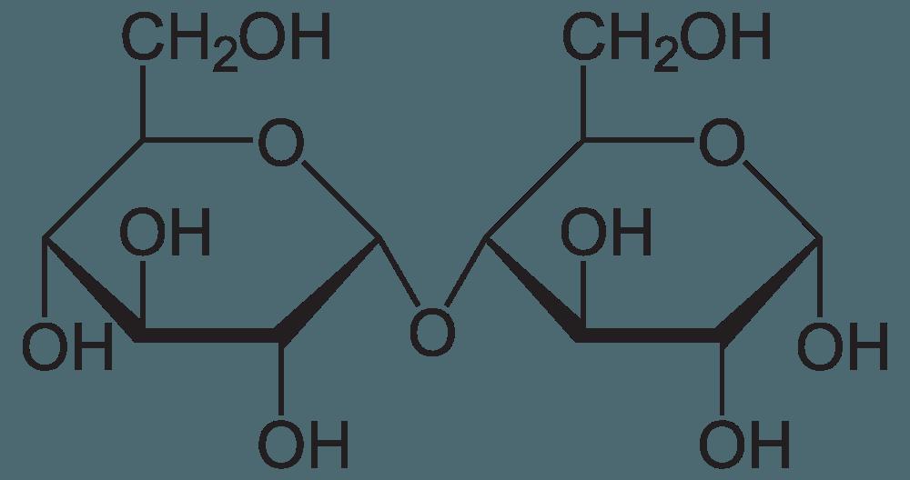 A Maltose molecule