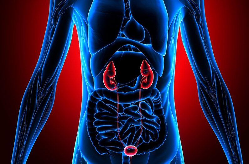 National Kidney Month: Kidney Disease 101 and How It Affects Life Insurance