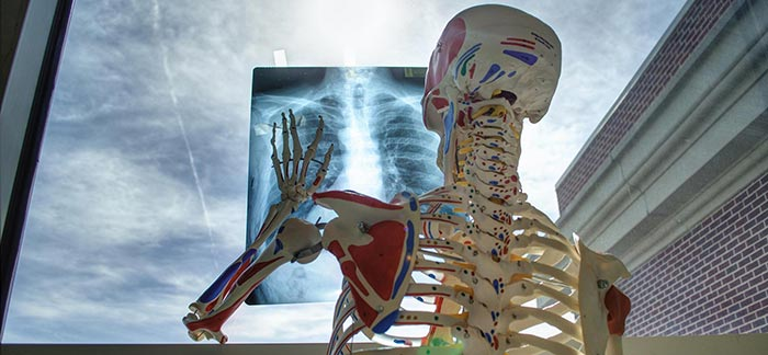 Image of human anatomy skeleton looking at chest X-ray for Quotacy blog: Taking Care of Your Bones and Joints.