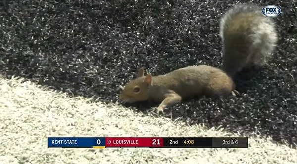 Image of a squirrel on a football field's endzone