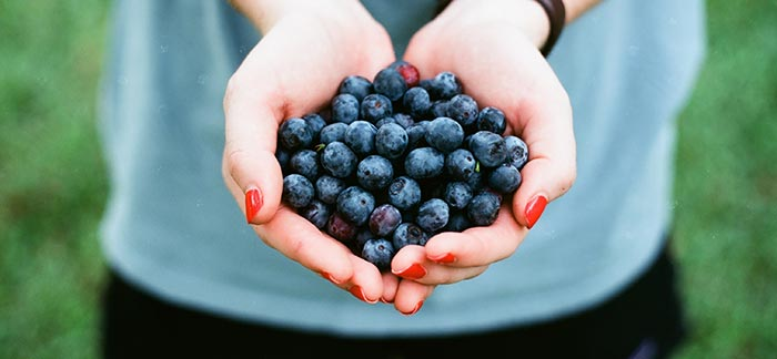 Image of hands holding blueberries for the Quotacy blog: Getting Fit for Your Life Insurance Application (Without Going to the Gym).